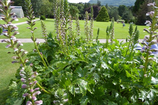 Muckross House, Gardens & Traditional Farms: Detailaufnahme