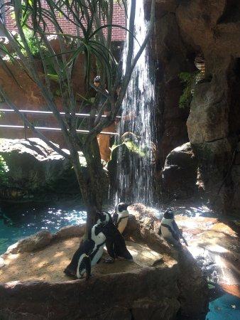 Dallas World Aquarium Tx Top Tips Before You Go