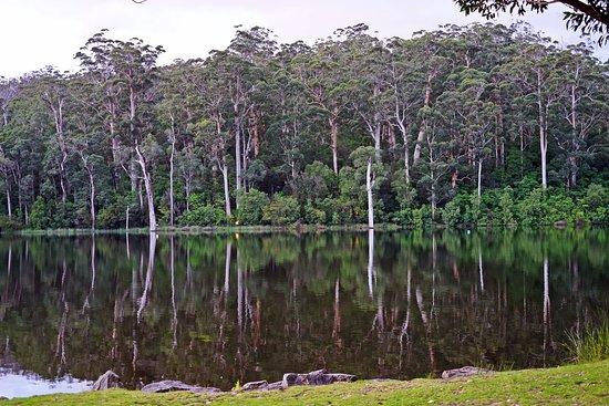 Pemberton, Australia: Amazing reflections...