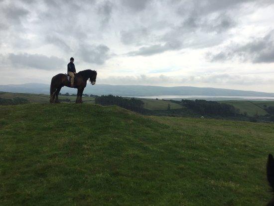 Cumbrian Heavy Horses: photo1.jpg