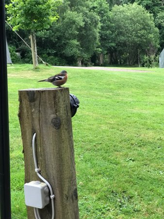 Dromquinna Manor: One of many birds we saw while relaxing