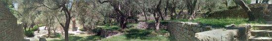 Sveti Stefan, Montenegro: Uppe bland olivträden