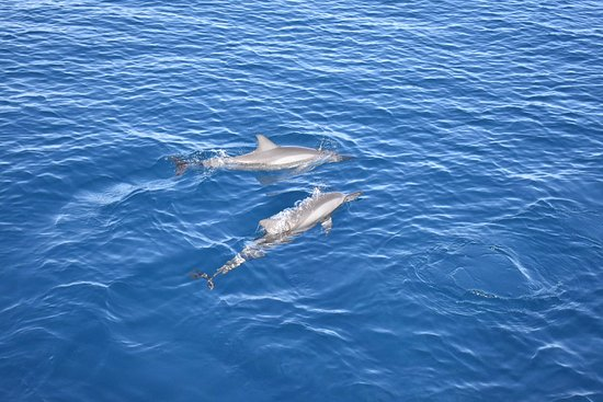 Vanua Levu, Fiji: Went out for a snorkel trip and got a dolphin show. Probably 10-15 dolphins following the boat!