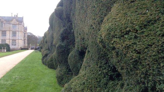 Montacute, UK: Funky topiary