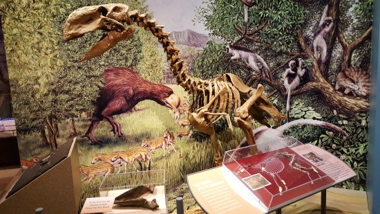 Worland, WY: Fossil section
