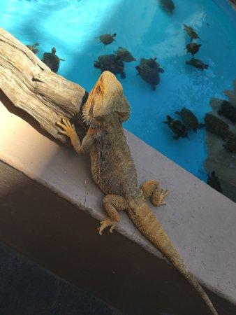 Aquaworld Aquarium & Reptile Rescue Centre: photo1.jpg