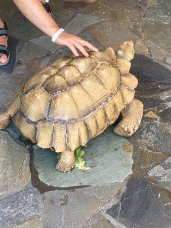 Aquaworld Aquarium & Reptile Rescue Centre: photo2.jpg