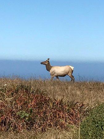 Tule Elk Preserve : photo0.jpg