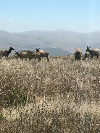 Tule Elk Preserve : photo1.jpg