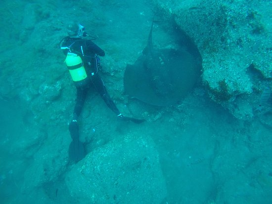 Los Gigantes, Spanien: My dive buddy (for the day) with a sting ray