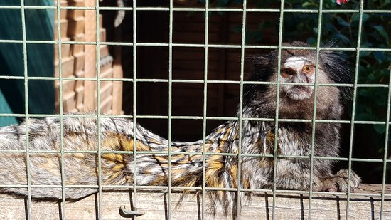 Somerset West, Güney Afrika: Monkey Town Primate Centre