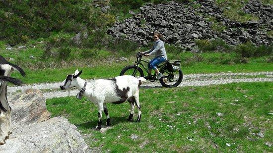 Spot E-bikes & More