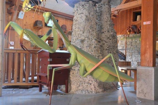 Rousset, France: Les insectes géants la mante religieuse Apiland