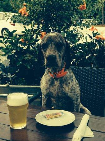 Cashiers, NC: Dog friendly restaurant