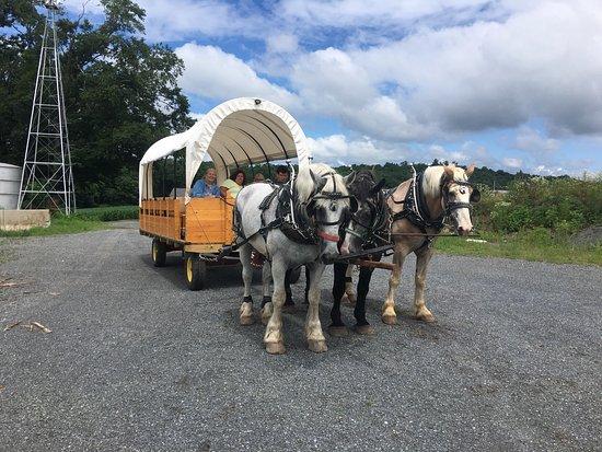 Denver, PA: Horse Drawn Conestoga Wagon Tours