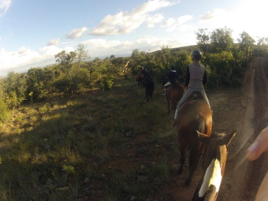 Vaalwater, África do Sul: Giraffe entdeckt und verfolgt :)