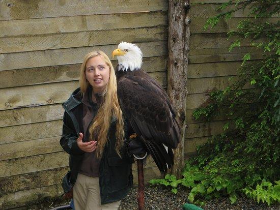 Alaska Rainforest Sanctuary: A rescued eagle