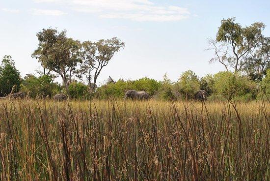 Maun, Botswana: We saw elephants on our return trip.