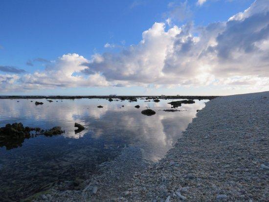 Lady Elliot Island Picture
