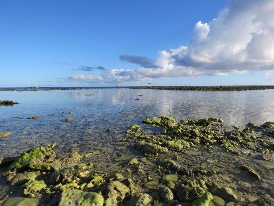 Lady Elliot Island صورة فوتوغرافية