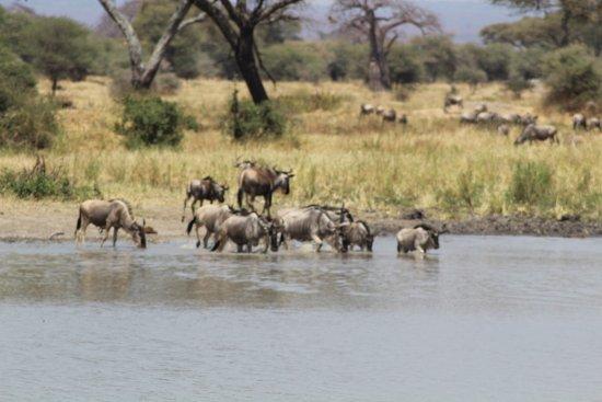 Tarangire National Park, Tanzania: 20170715040147_IMG_1644_large.jpg