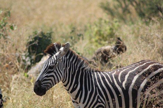Tarangire National Park, Tanzania: 20170715035640_IMG_1629_large.jpg