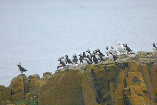 Anstruther, UK: The island is covered in birds