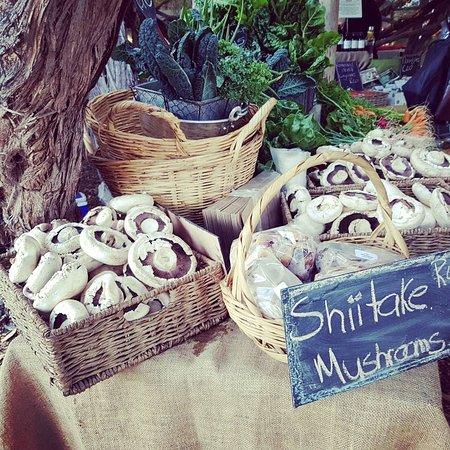 Sedgefield, South Africa: organic mushrooms and falafel