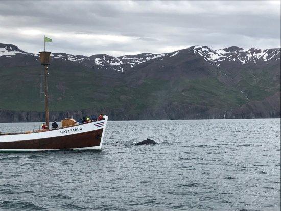 Хусавик, Исландия: photo0.jpg