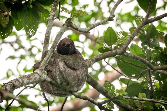 San Carlos, Nicaragua: Sloth