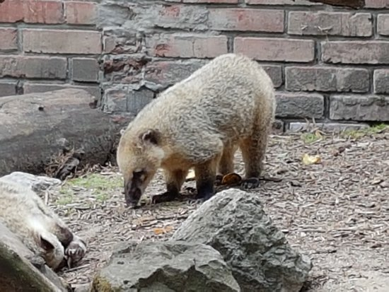 Lille Zoo: 20170721_134109_large.jpg
