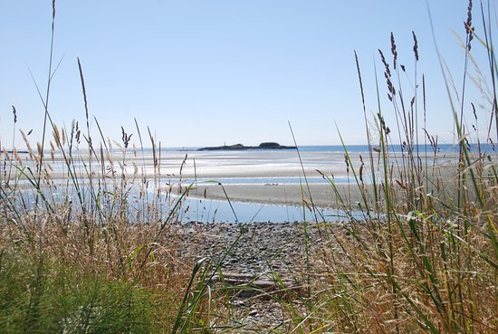 Witty's Lagoon Regional Park: photo with tide out looking towards the Pacific Ocean