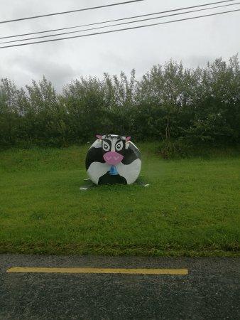 Roscommon, Irlanda: IMG_20170719_170032_large.jpg