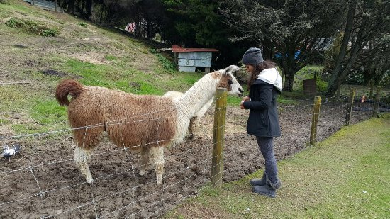 Whitianga, Nowa Zelandia: photo0.jpg