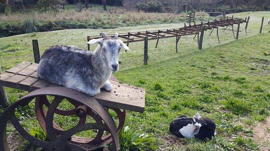 Whiti Farm Park: photo9.jpg