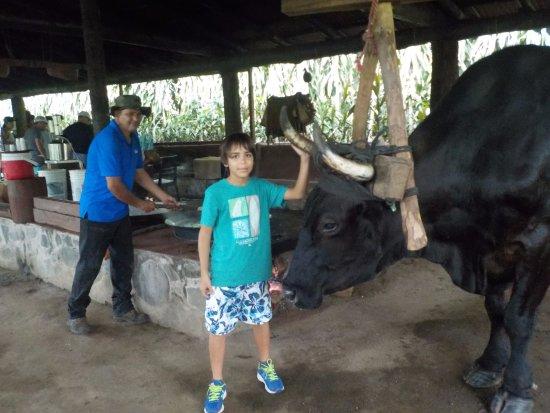 Rincon de La Vieja, Costa Rica: Nicolas con el Buey.