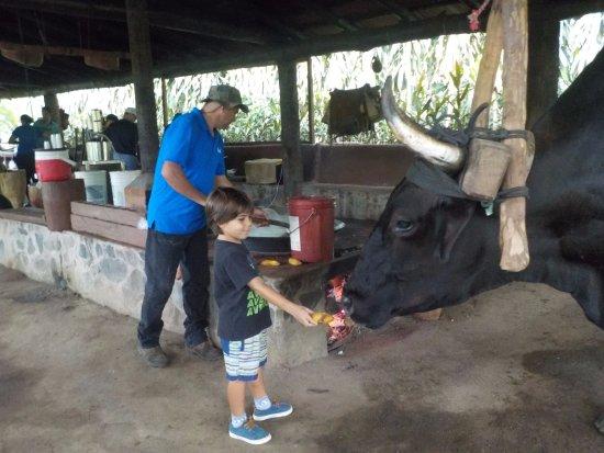 Rincon de La Vieja, คอสตาริกา: ignacio y Gerardo pura vida