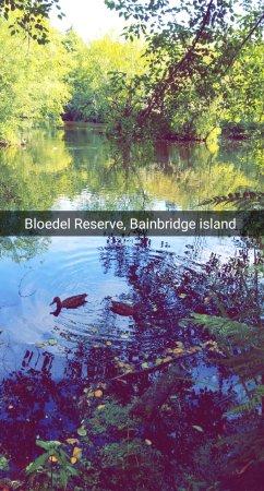 班布里奇岛照片