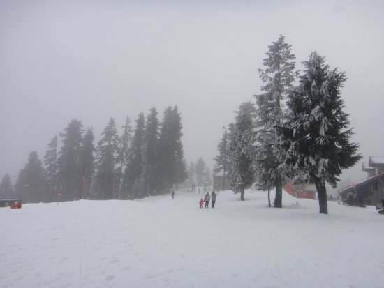 Mount Seymour Provincial Park : Foggy and snowy conditions