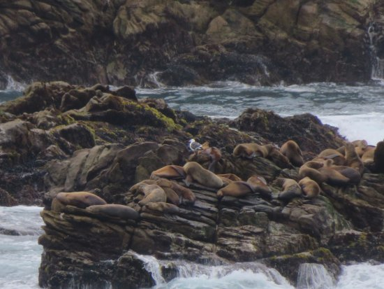 Point Lobos State Reserve: Sea Lions at Point Lobos
