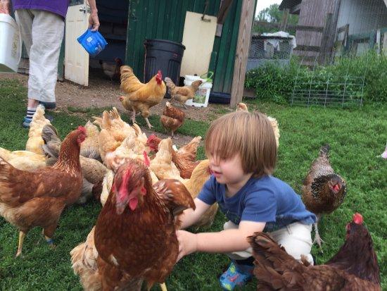 Callicoon Center, Estado de Nueva York: Apple Pond Farm