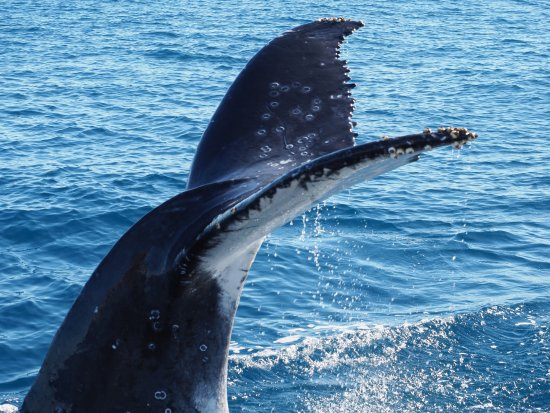 Hervey Bay, Australia: tail