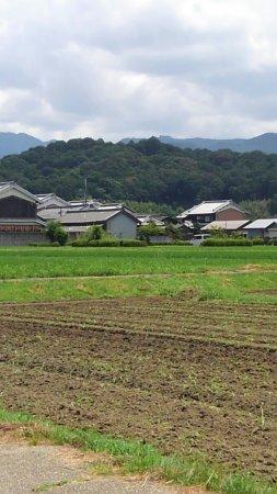 Yamato Sanzan: 香久山の遠望