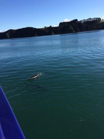 Paihia, Yeni Zelanda: .....