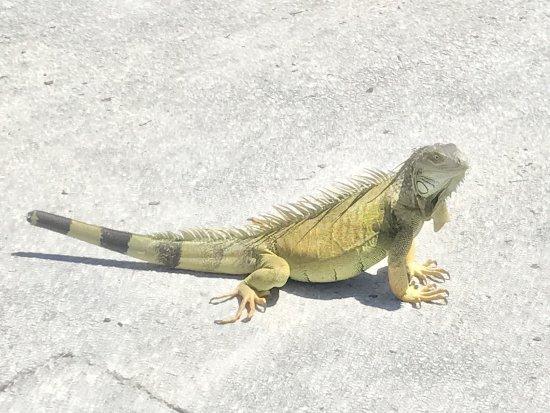 Miami Seaquarium: photo2.jpg