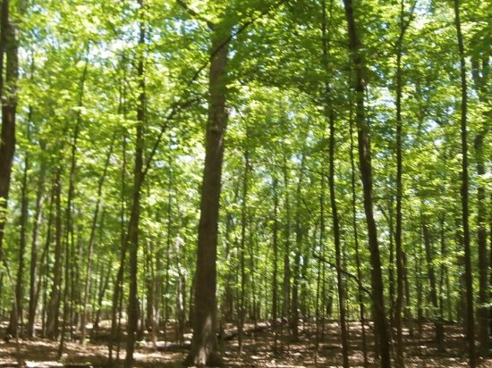 West Bloomfield, MI: unspoiled forest