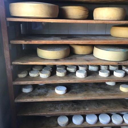 Magoebaskloof, Afrique du Sud : Handmade organic cheese in a relaxed farm setup