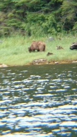 Port McNeill, Kanada: Grizzlybärin mitb zwei Jungtieren