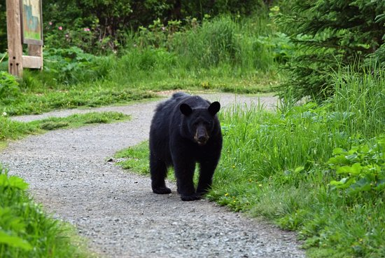 Eagle River, AK: same bear we followed