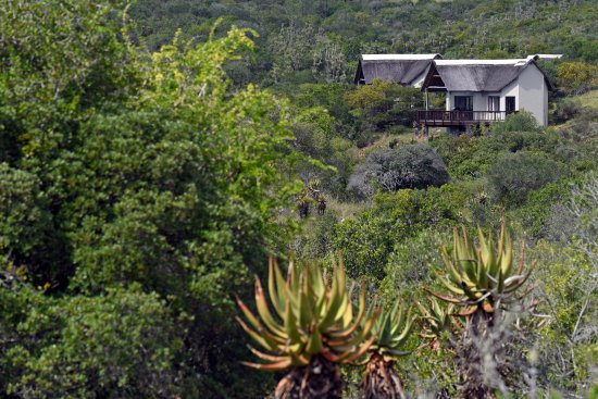 Eastern Cape, แอฟริกาใต้: Cottages